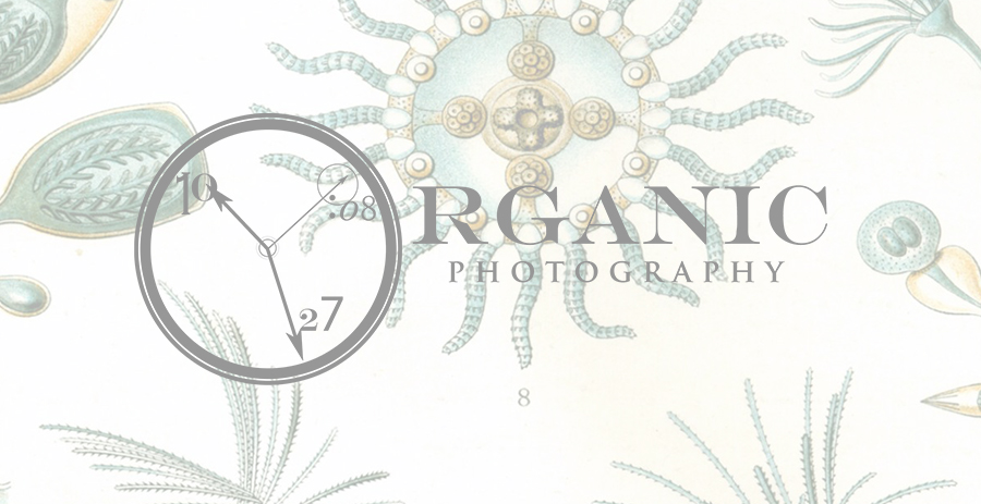 Organic Photography logo